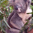 Just Woke - NSW by CasPhotography