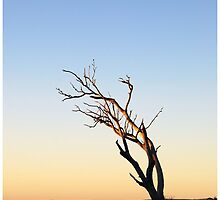 Skeletal Sunrise by George Petrovsky