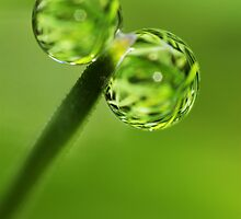 Grass Green Dew Drops by Sharon Johnstone