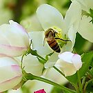 Spring May Flowers bring Pretty Bee's by Brenda Dahl