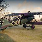 Albatros D V by Kofoed