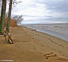 Hollow days at Point Pelee by Erika Price
