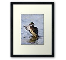 The little wood duck that could Framed Print