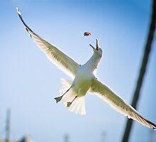 Seagulls by Barathi