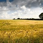 The wheatfield by AlanPee