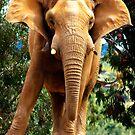 Elephant Alert by Mike Weeks