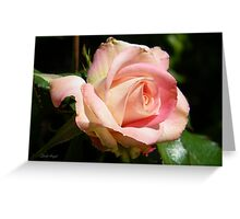 A Delicate Pink Rose Greeting Card