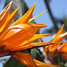 Bird of Paradise Flowers by Teresa Zieba