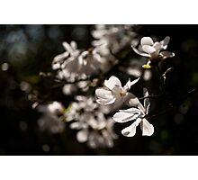 White Beauty Photographic Print