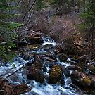 Sharrott Creek by Bryan D. Spellman