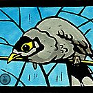 Noisy Miner by Toradellin