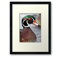 """Ha, Take that peacock!"" Framed Print"
