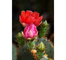 The Prickly Beauty Photographic Print