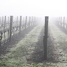 misty morning by lutontown