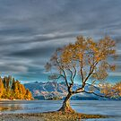 Lone Tree, Lake Wanaka, New Zealand by Neil Protheroe
