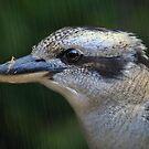 Kookaburra Rain by Tainia Finlay
