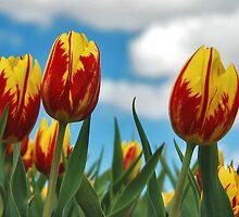 Spring on Flakkee 5 by Adri  Padmos