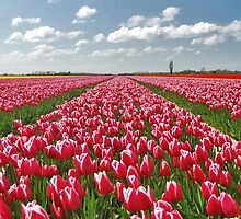 Spring on Flakkee 6 by Adri  Padmos