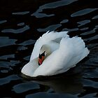 A swan glides across dark waters. by Colin Munro