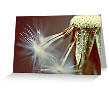 chasing the stars Greeting Card