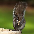 """I Found My Nut's"" by JBendeth"