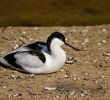 Sunbathing by LifePictures