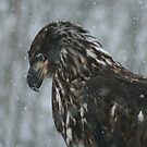 Snowy Eagle by Mike Shero