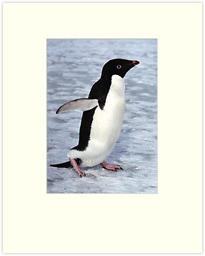 Adelie Penguin Walking on the Fast Ice by Carole-Anne