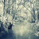 Wyong Creek by ozzzywoman