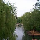 Punting through the Willows by Potz