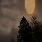 Moon And Trees. by mikepemberton