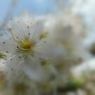 Blossom. by Livvy Young