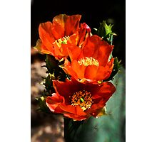 Spring into Red Photographic Print