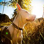 Saffy in the Sun by James Cole
