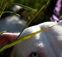 Sapphire in the Grass by James Cole
