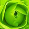 Bright Lime Green Rose Flower by Natalie Kinnear