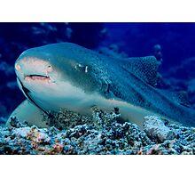 Leopard Shark, Great Barrier Reef Photographic Print