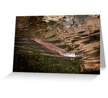 North American River Otter Greeting Card