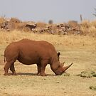 The White Rhinoceros (2) by Darren Stein