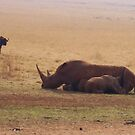 White Rhino with Mother and Wildebeest by Darren Stein