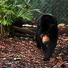 Asian Sun Bear by Sea-Change