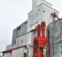 The grain elevator by Erika Price