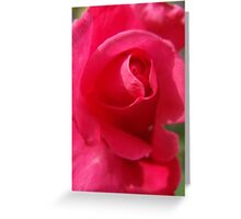 Don't pick your rose! Greeting Card