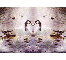 My love paramour Photographic Print