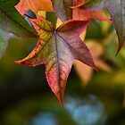 Autumn Leaves by gmws