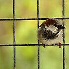 Don't fence me in! by Jacqueline van Zetten