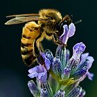 Lavender Bee by Henry Jager