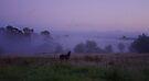 Dawn colt by Penny Kittel