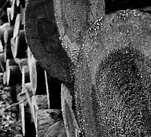 Logs by Magdalena Warmuz-Dent