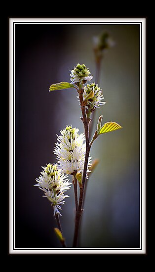 Sure Sign of Spring by Victoria Jostes